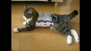 �������� ������ ��������� funny cat play with box ������� ��� � ������� ������� ����� ��� ���� ��������� � ��������
